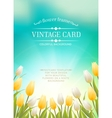 Summer card with white tulips vector