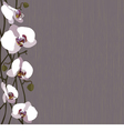 Purple background with white orchid flowers vector