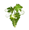 Green grapes vector