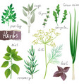 Herbs set vector
