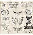 Set calligraphic hand drawn butterflies vector