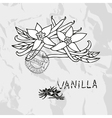 Hand drawn vanilla vector
