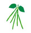 Delicious fresh green beans on a plant vector