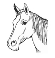 Head of horse vector