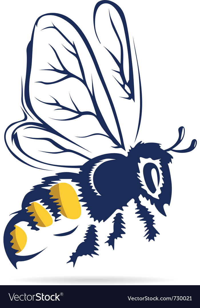 Honey bee flying vector image