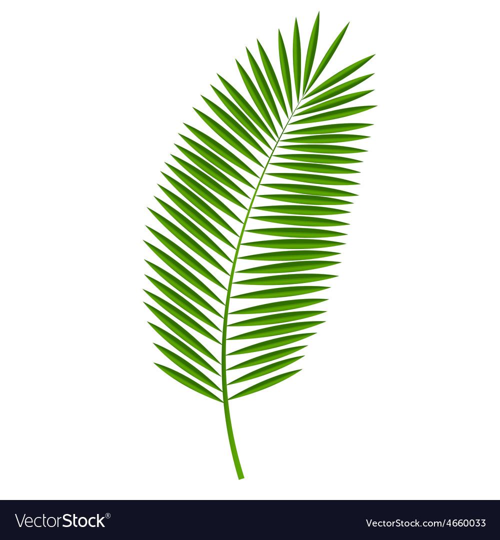 Palm Leaf vector image