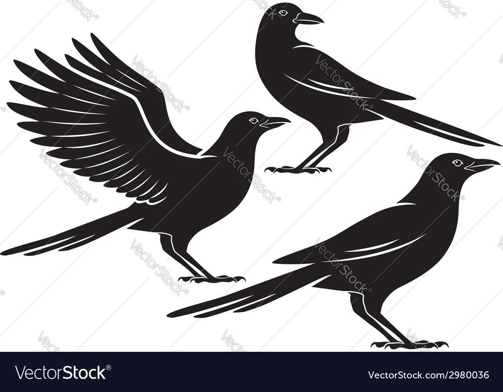 Crow vector image