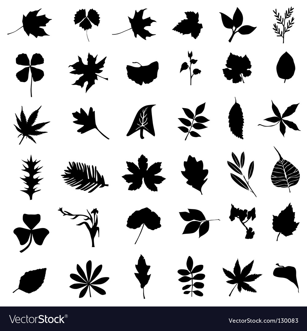 Set of leaf vector image