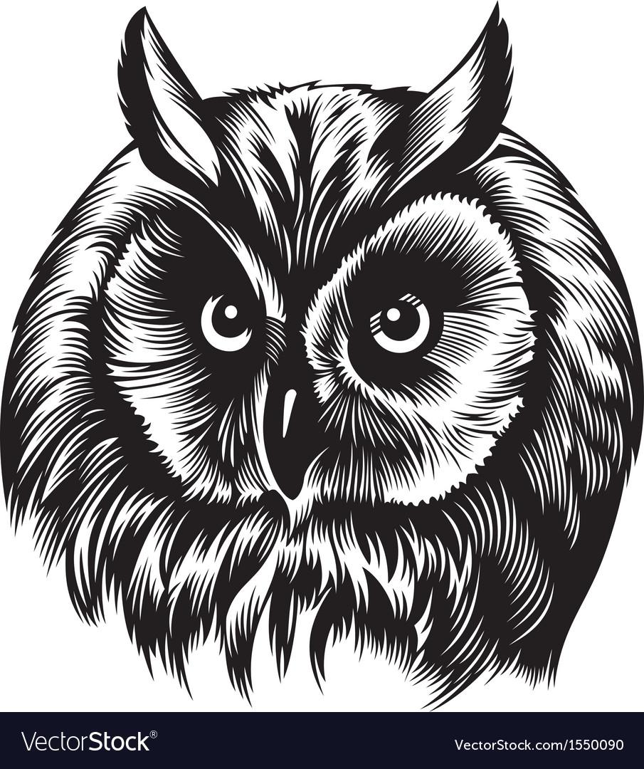 owl head royalty free vector image vectorstock