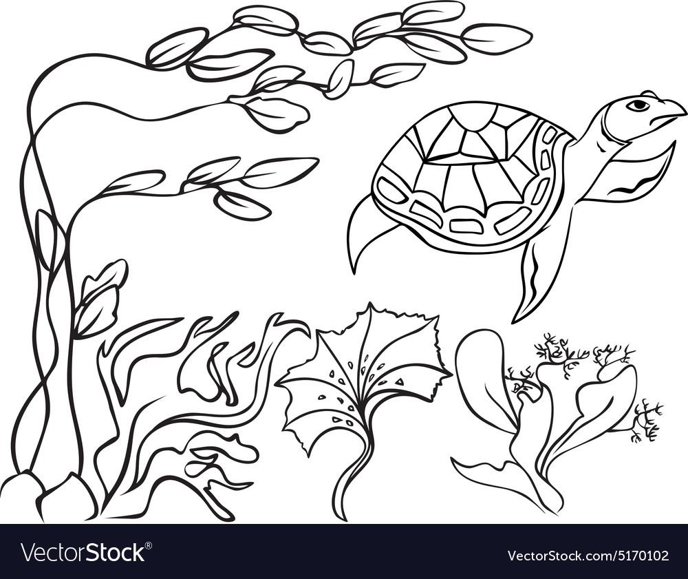 Sketch turtle in underwater world vector image
