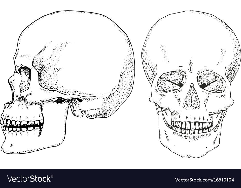 Human Biology Anatomy Engraved Hand Royalty Free Vector