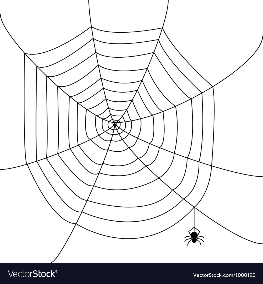 Spider web vector image