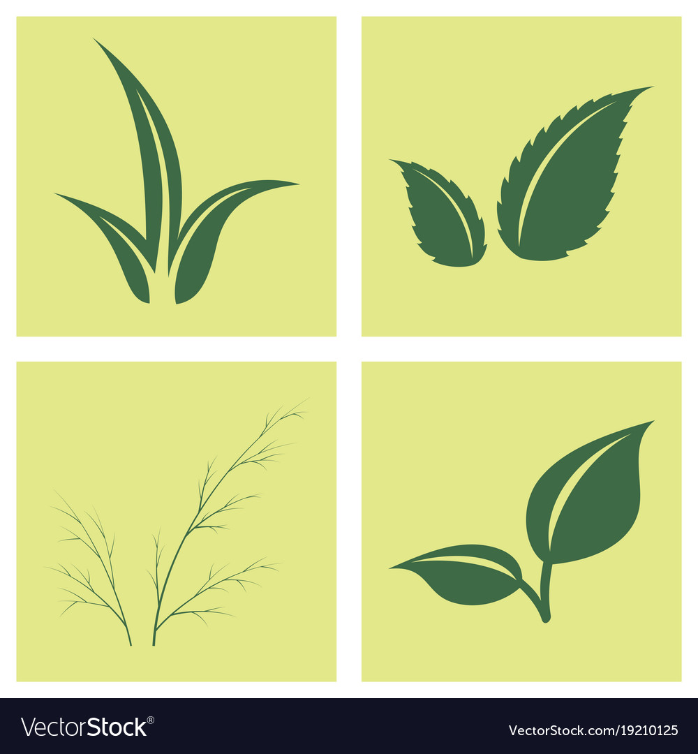 Leaves icon set isolated on background various