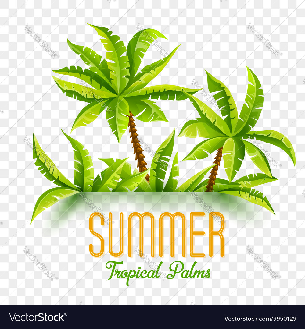 Summer coconut palms vector image