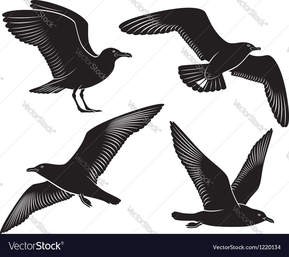 Bird seagull vector image