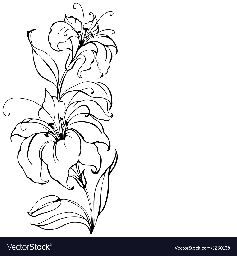 Lily flower vector image