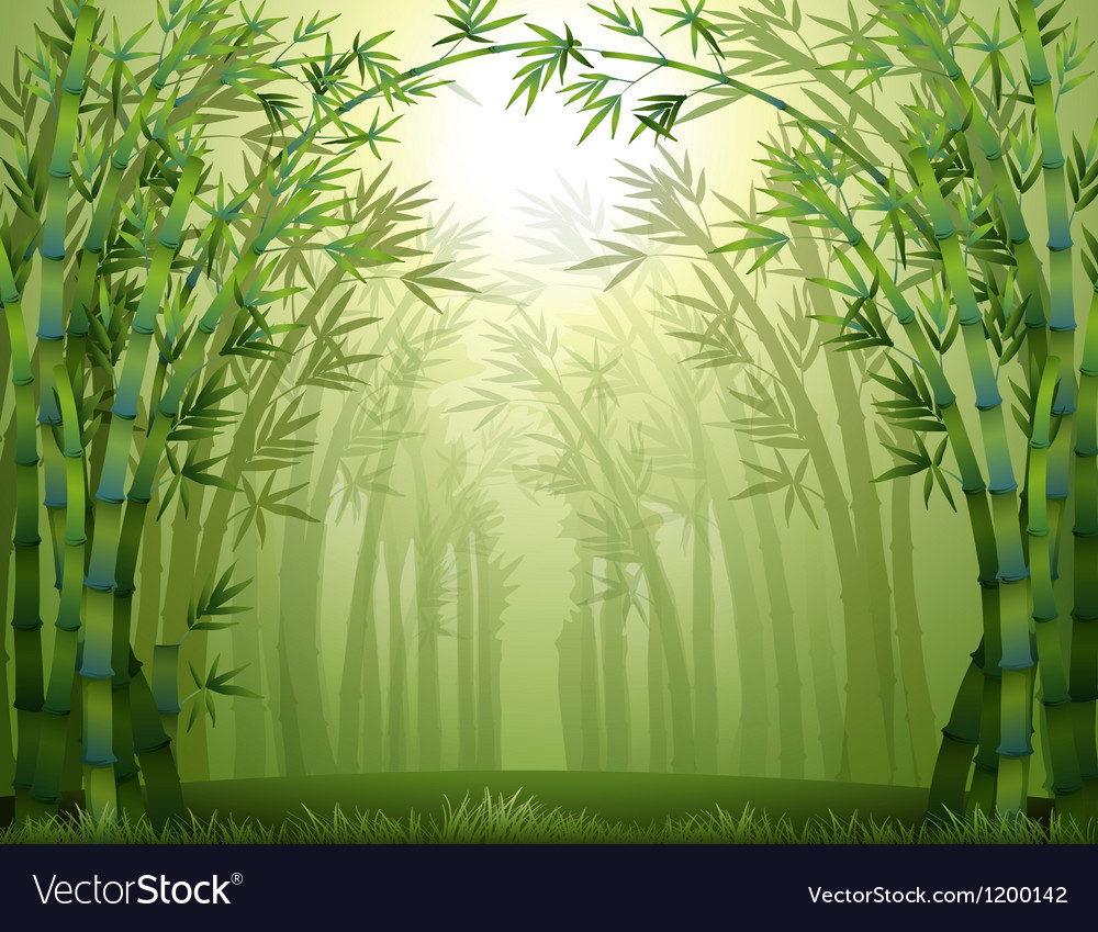 Bamboo trees inside the forest vector image