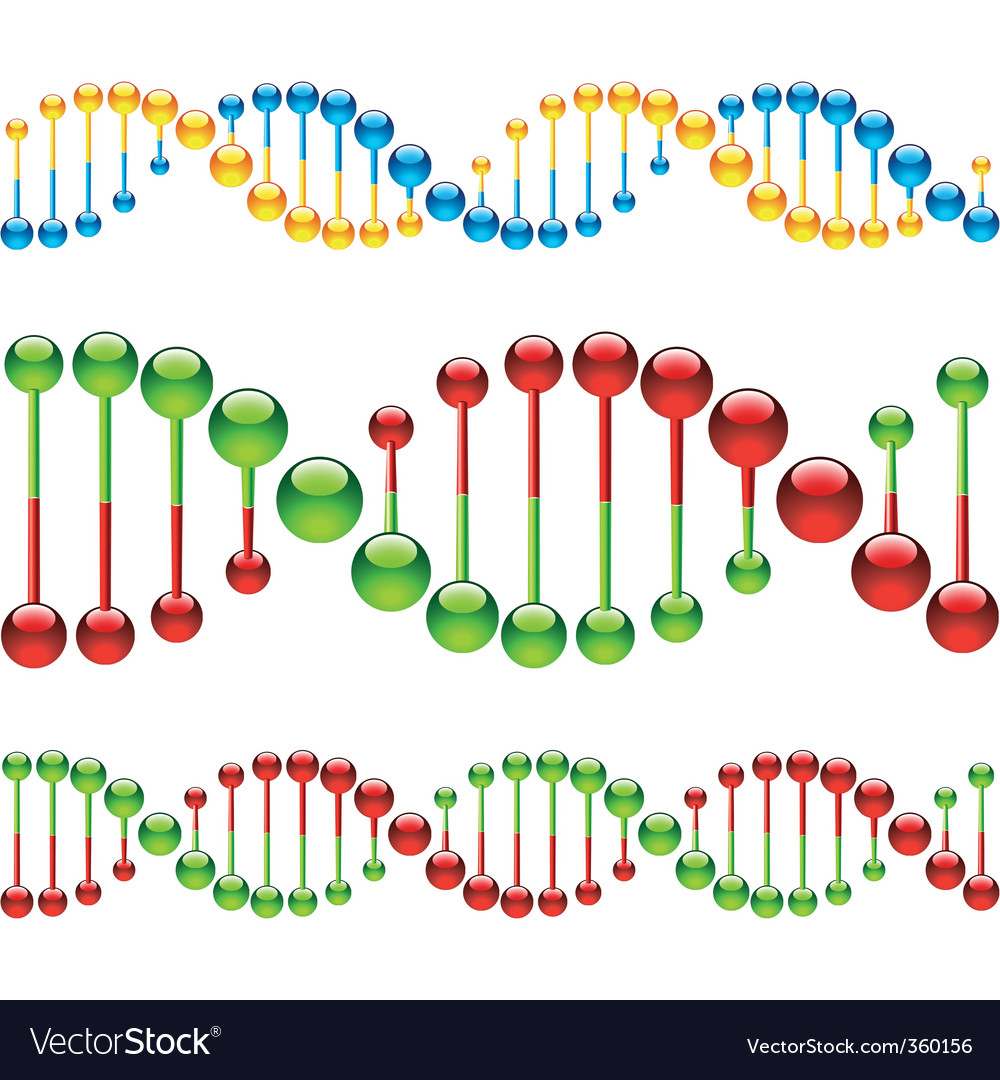 DNA strands Vector Image