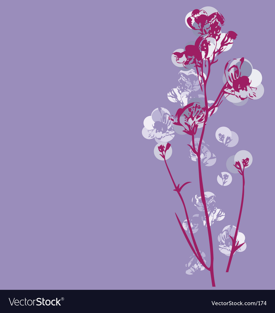 Cherry blossom graphic vector image