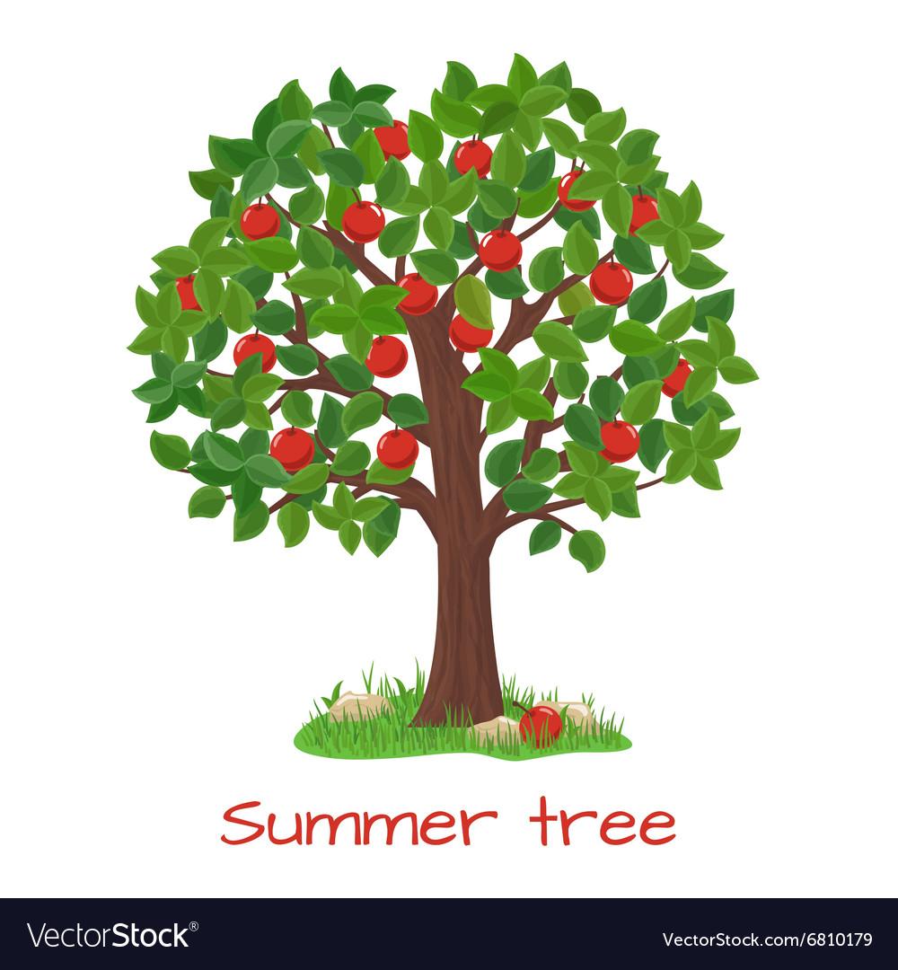 Green apple tree Summer tree Royalty Free Vector Image