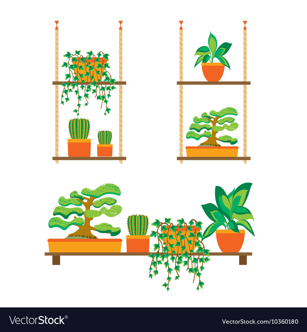Green Plants Shelves for Home or Office vector image