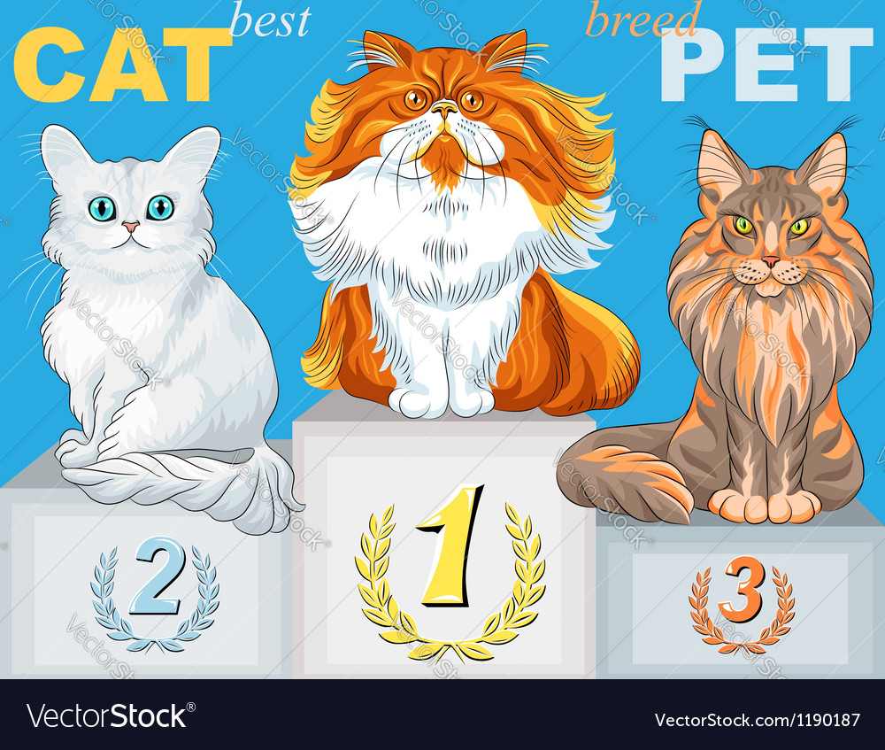 Fluffy cat champion of different breeds on the pod vector image