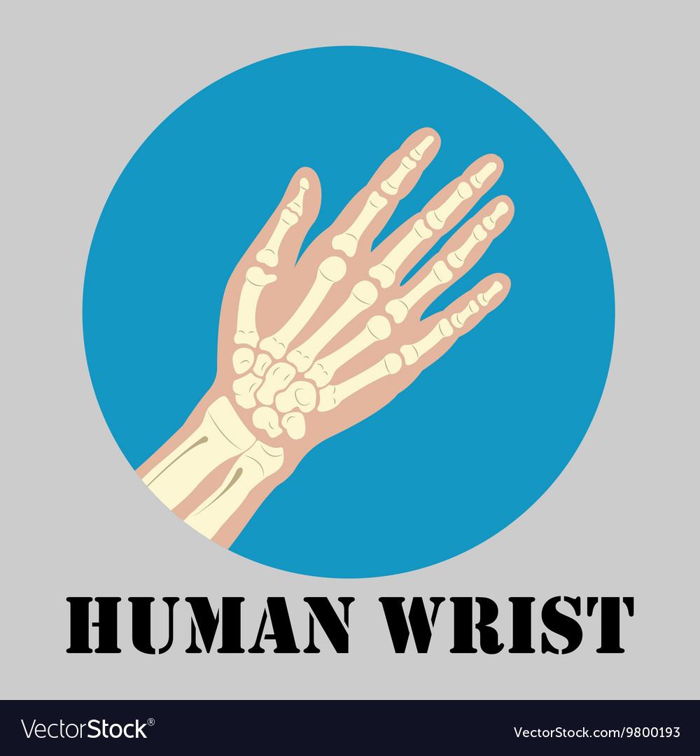 Human wrist emblem vector image