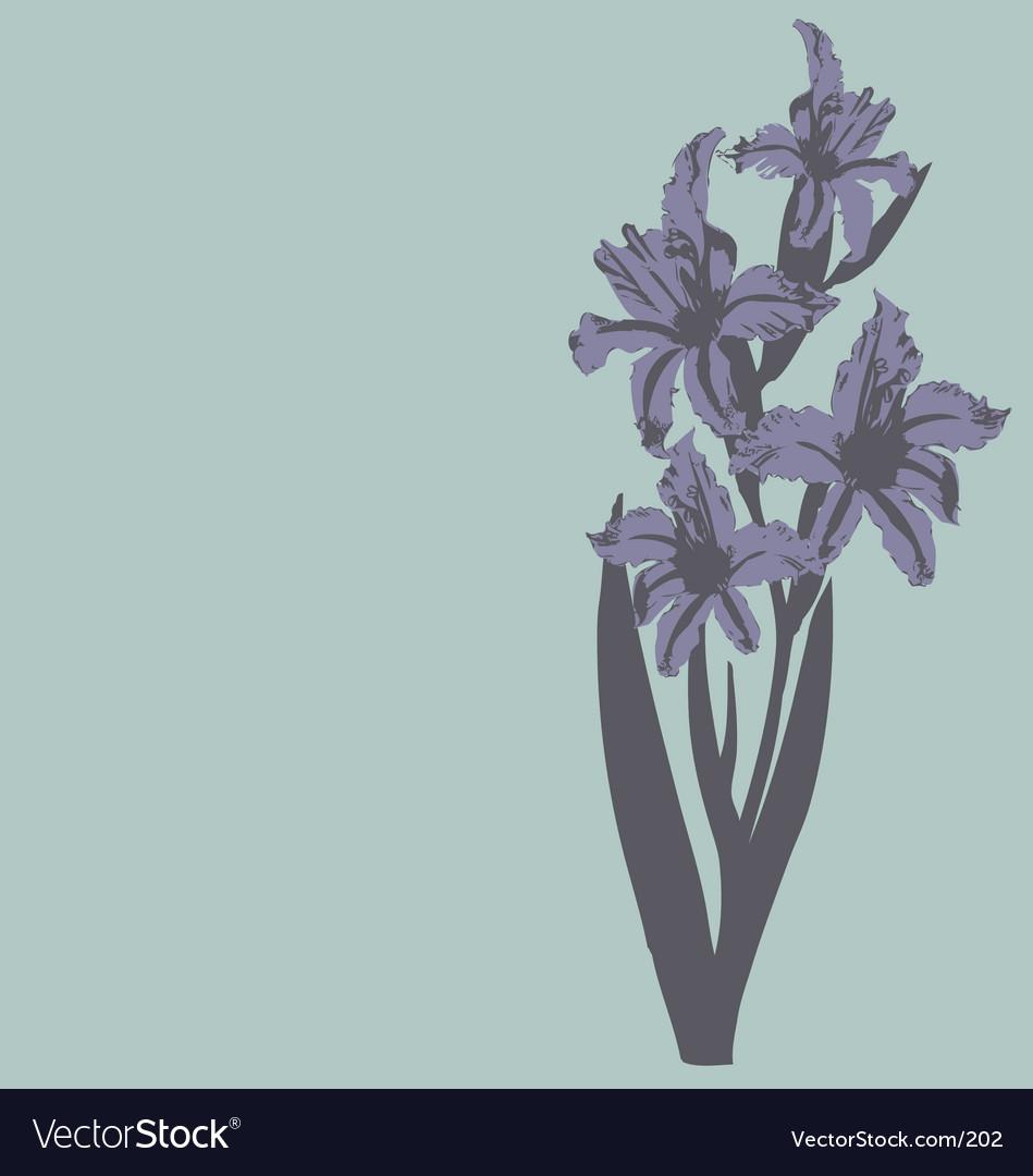 Daylillie illustration vector image