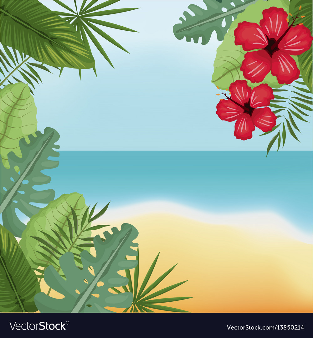 Beauty beach hibiscus palm island vector image