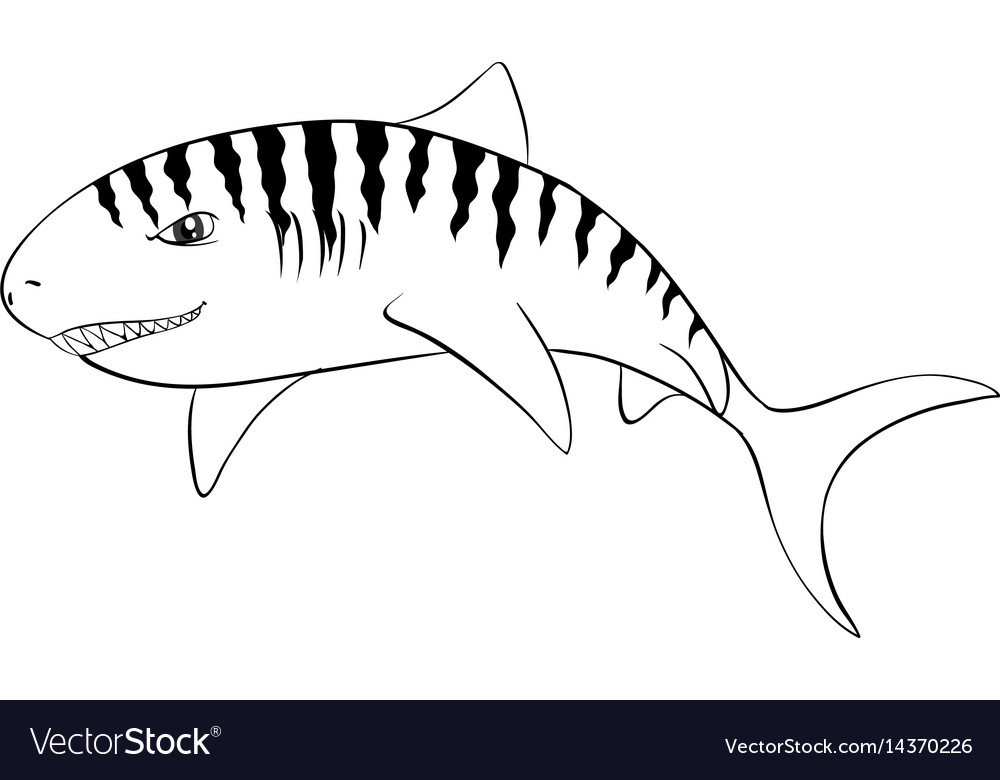 Drafting animal for tiger shark vector image