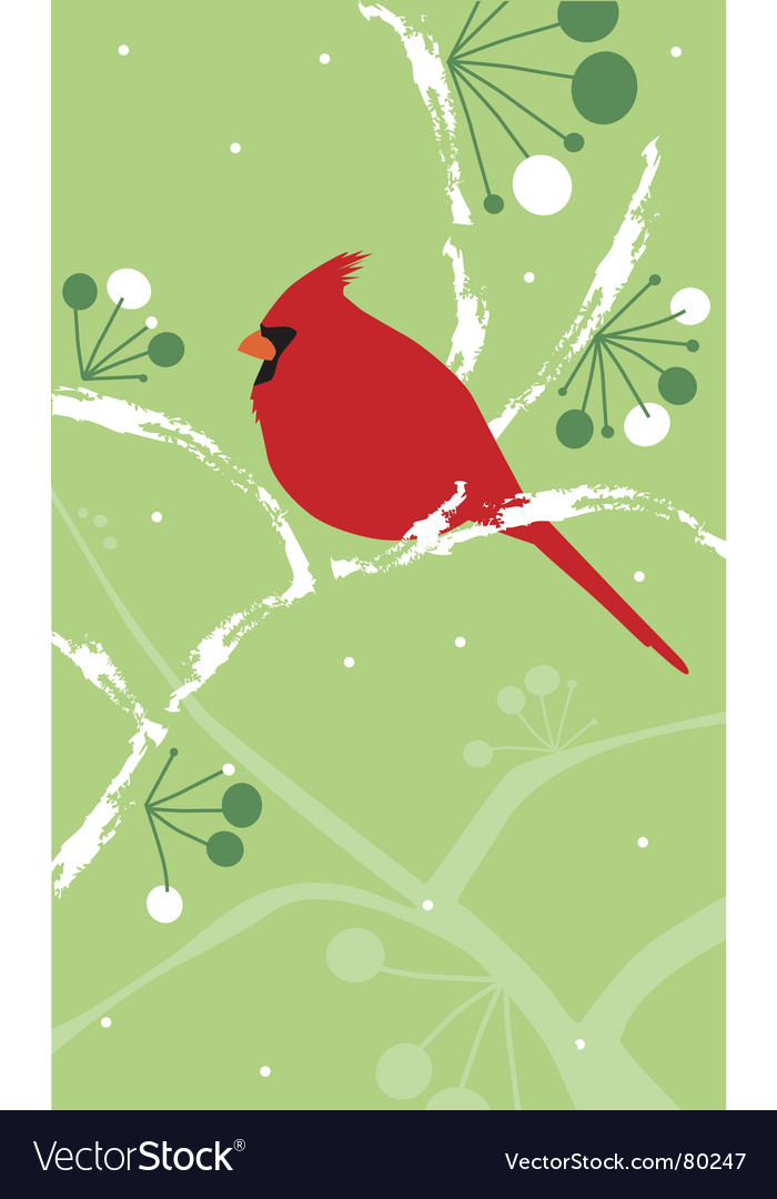 Cardinal on snowy branch vector image