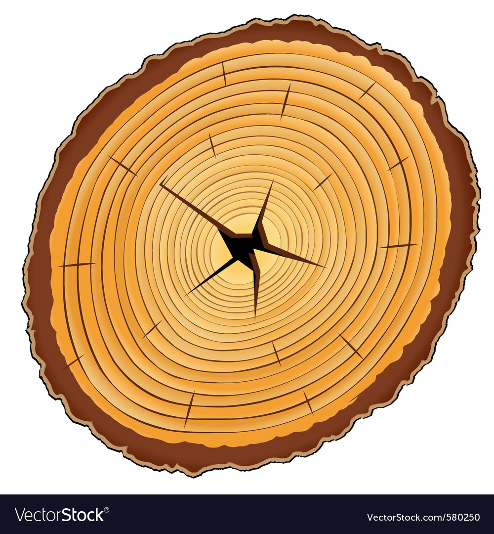Wooden cross section vector image