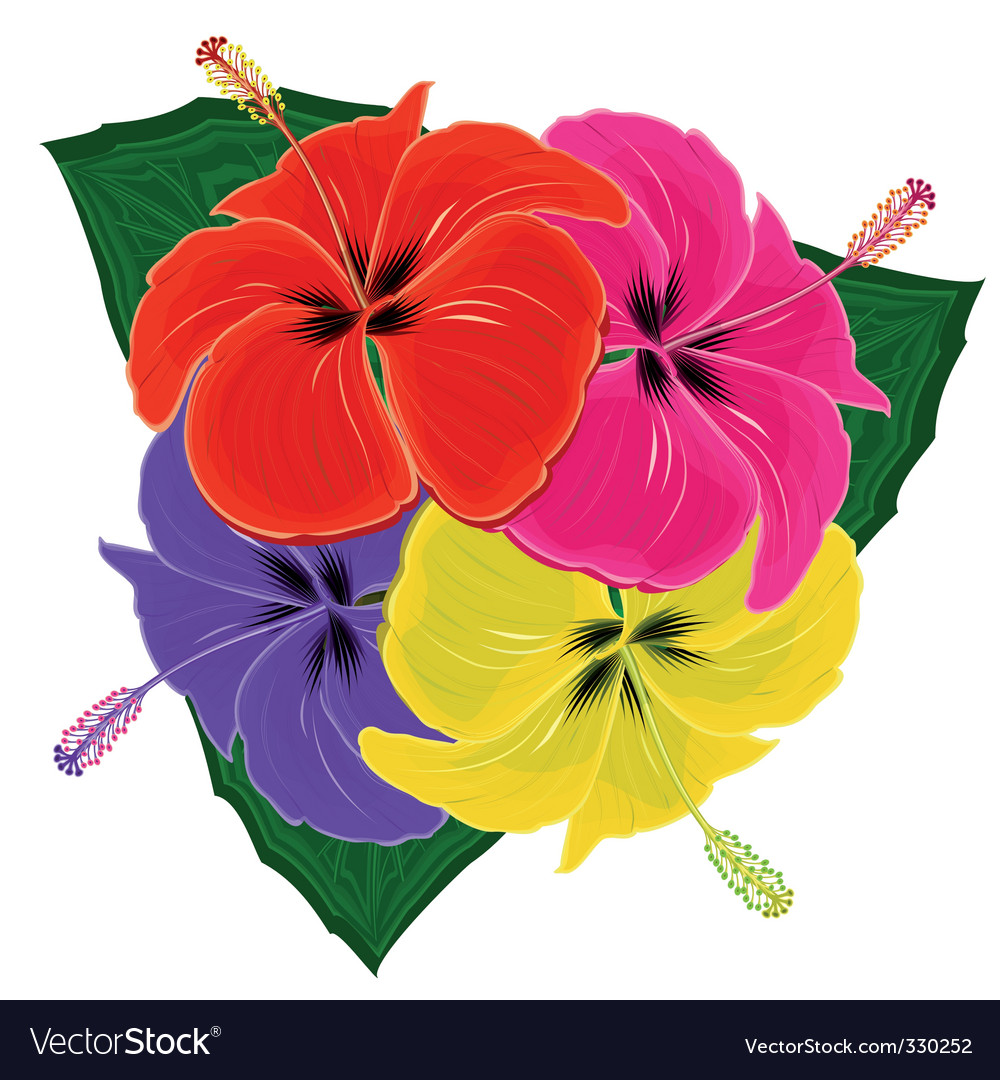 Multicolored hibiscuses vector image