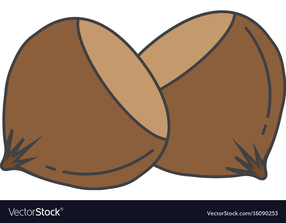 Flat color hazelnut icon vector image