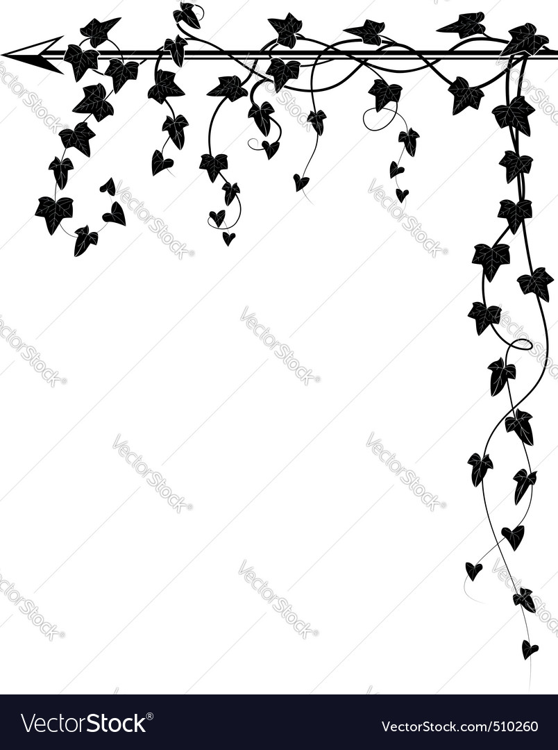 Arrow and ivy Vector Image