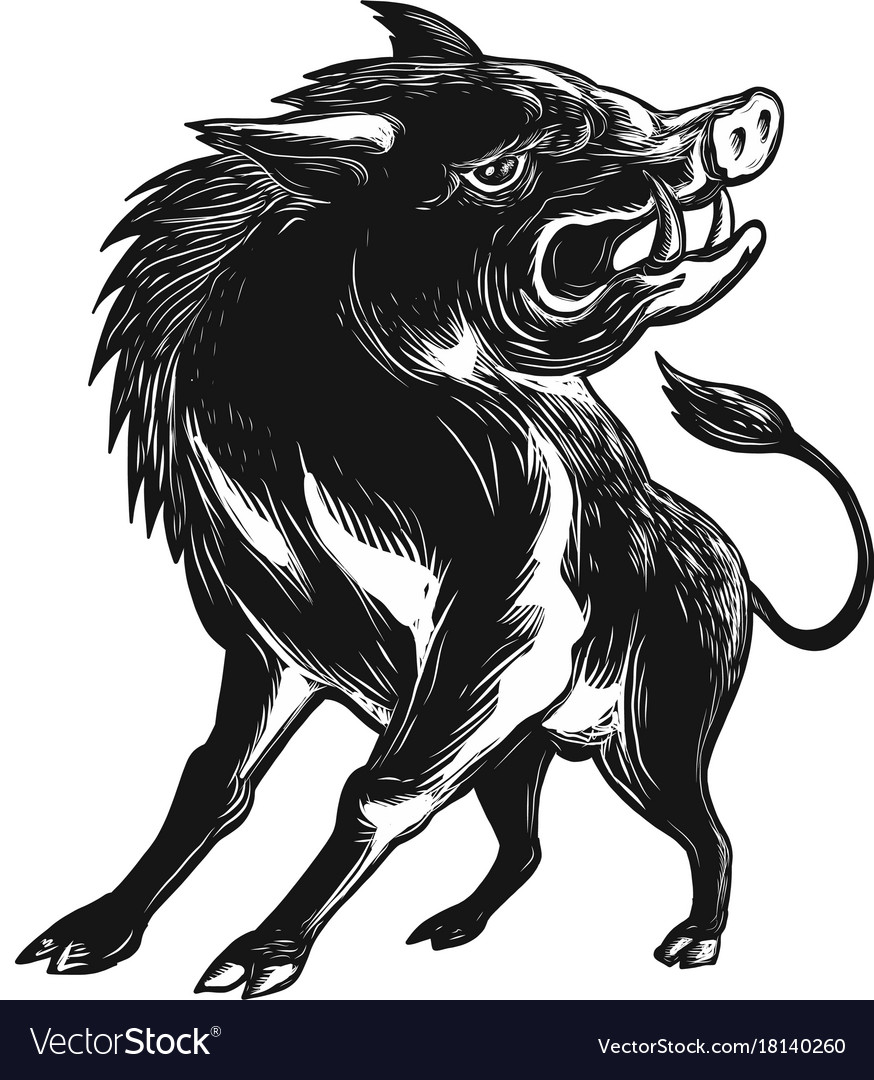 Angry wild hog razorback scratchboard vector image