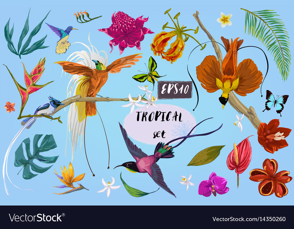 Bright tropican birds and flowers vector image