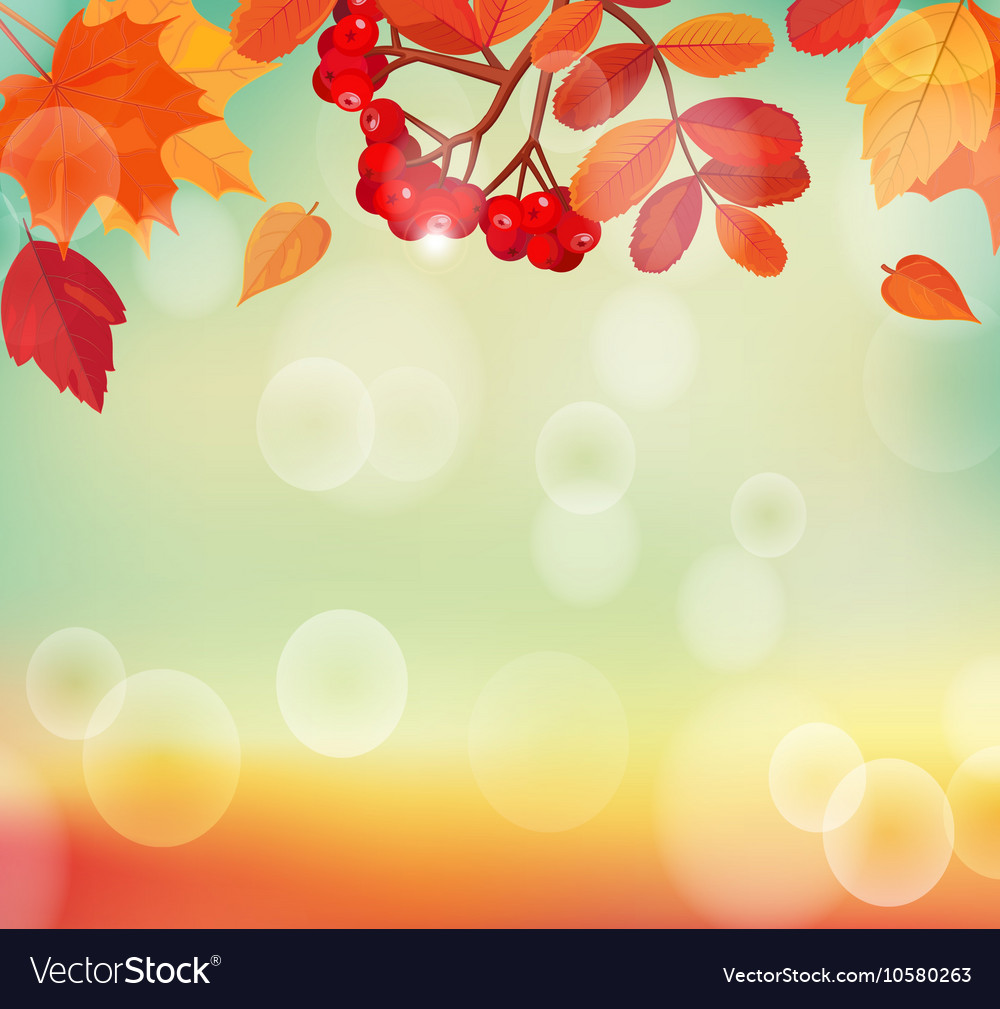 Autumn background with colorful leaves and rowan vector image