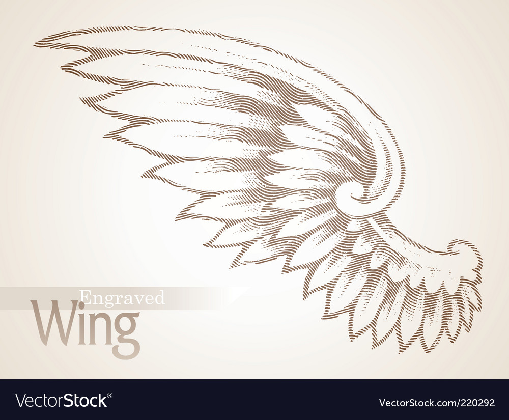 Engraved ornate wing vector image
