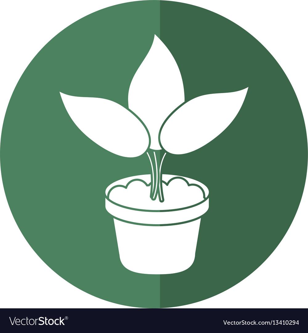 Pot plant garden concept shadow vector image
