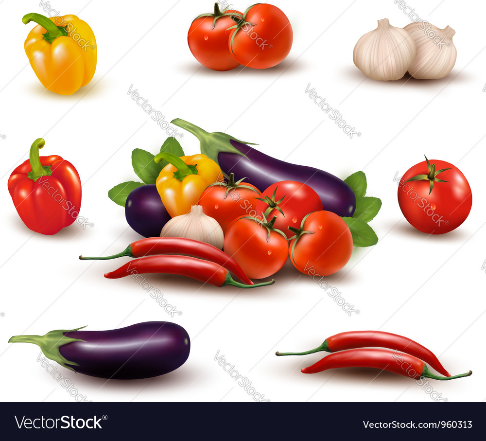 The big colorful group of vegetables vector image