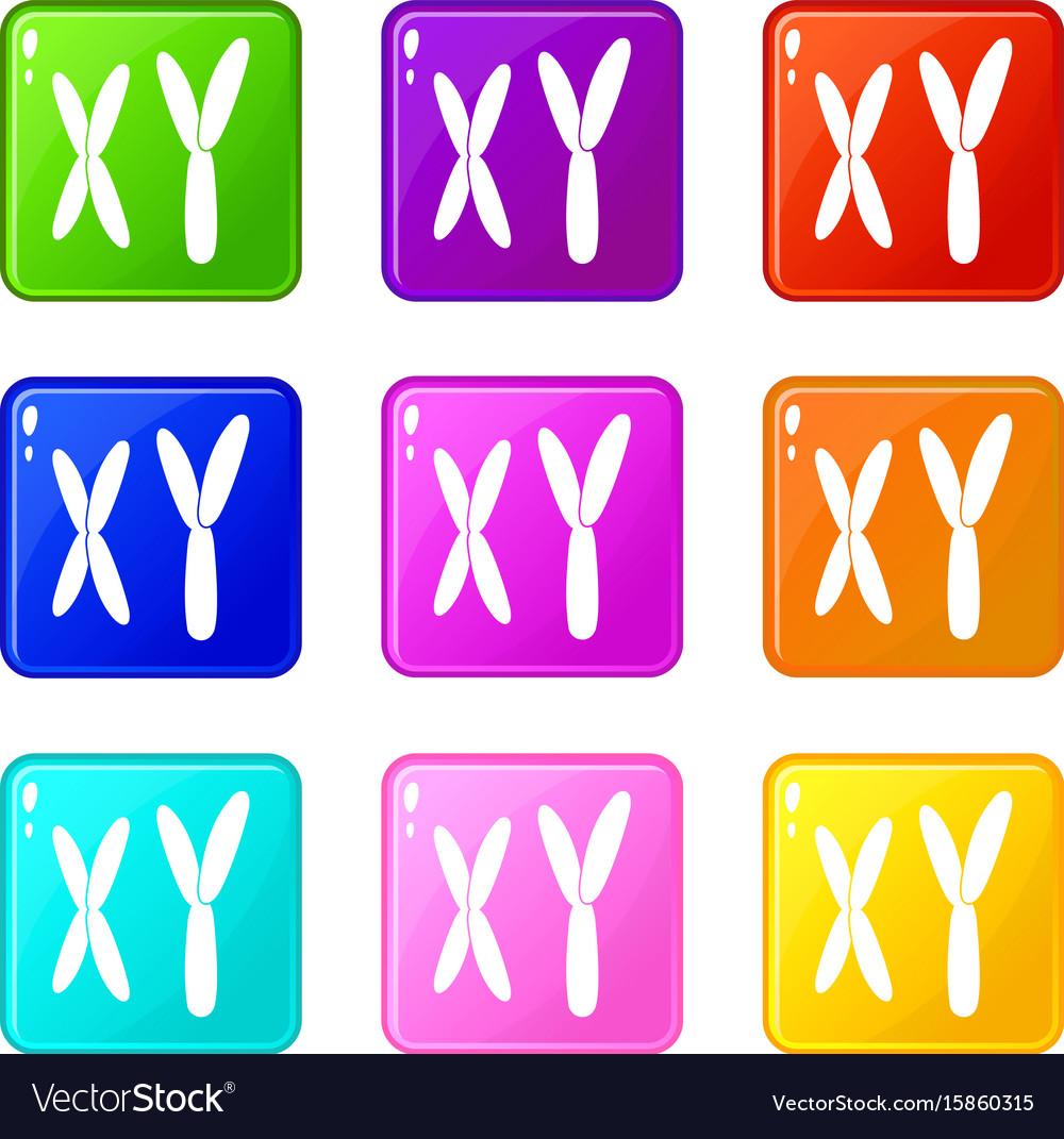 Human chromosomes icons 9 set vector image