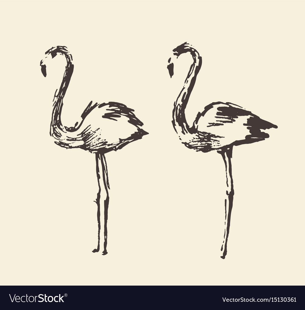 Flamingo hand drawn vector image