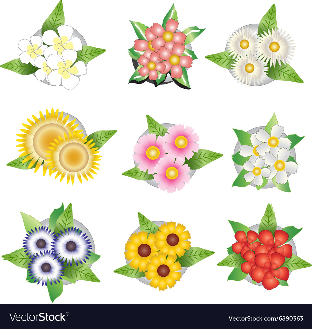 Plants and flower top view for interior Royalty Free Vector for Plant Top View Vector  186ref