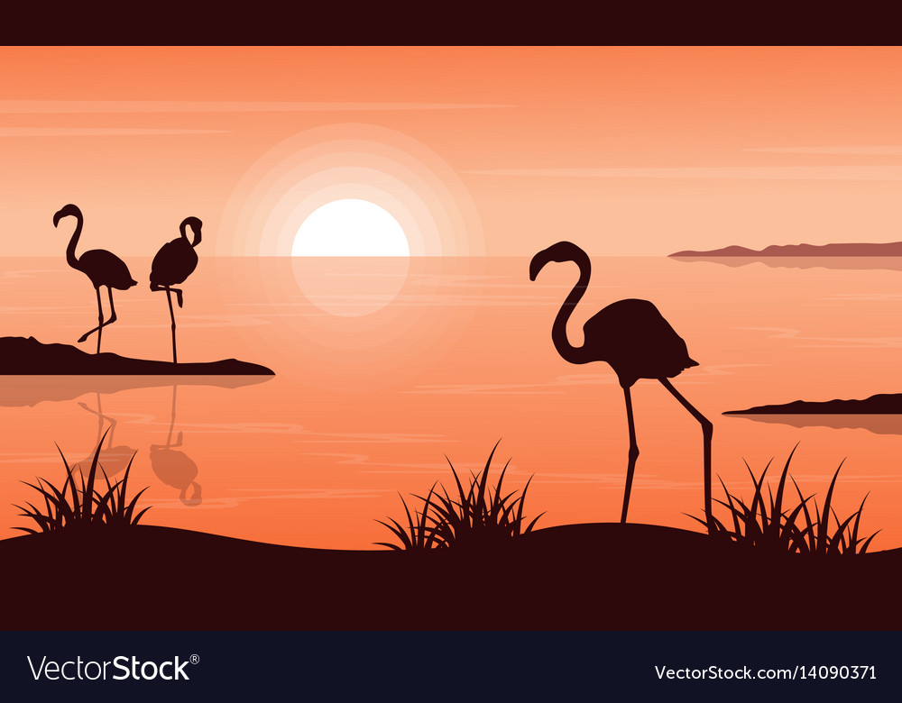 Beauty landscape of flamingo at sunset silhouettes vector image