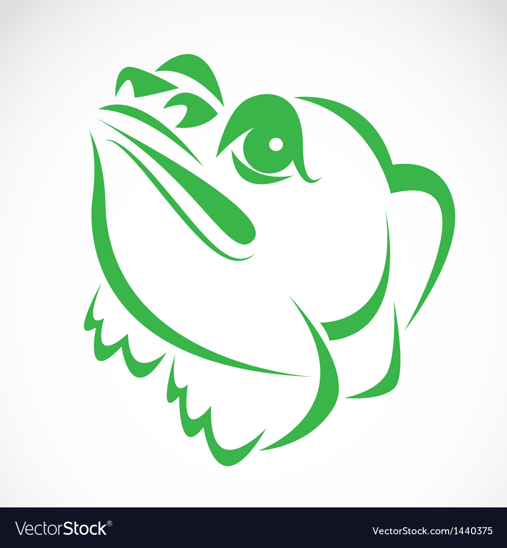 Image of an frog vector image