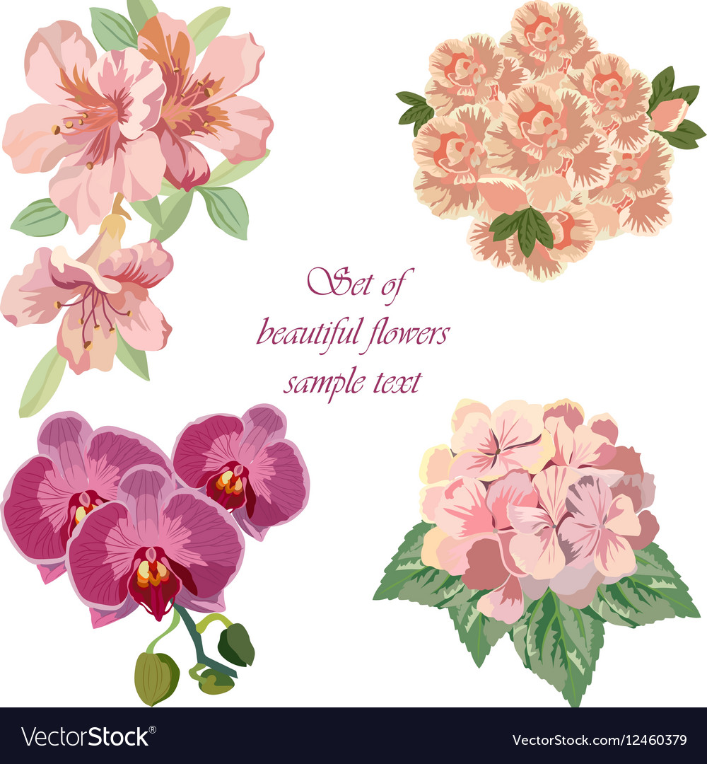 Spring Summer Flower Set vector image