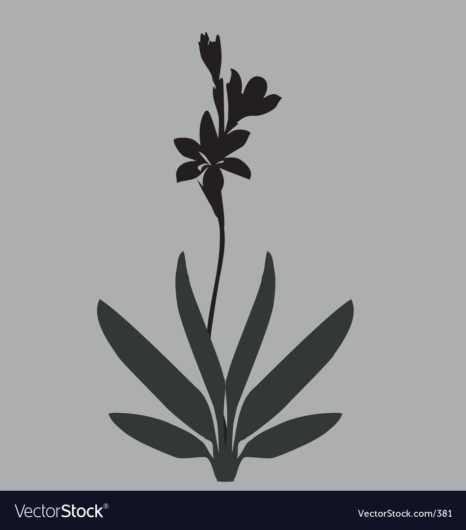 Simple lily vector image