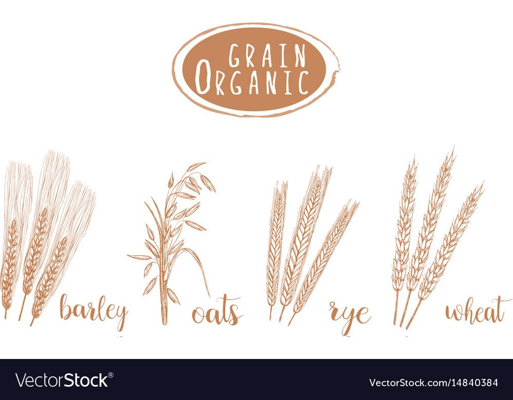 Organic grain sketch hand drawing vector image