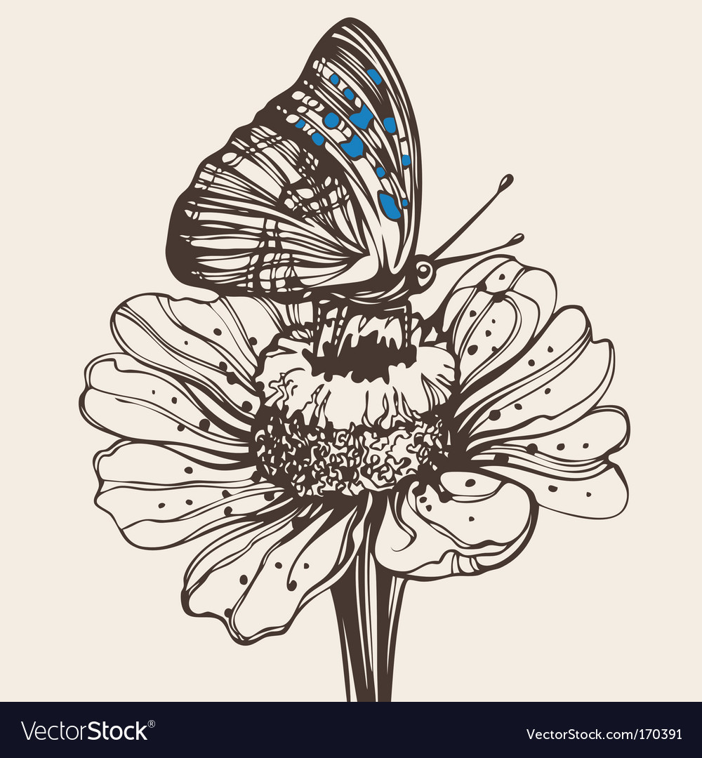 Butterfly on a flower drawing vector image